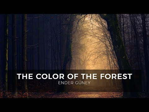 The Color Of The Forest - Ender Güney (Official Audio)