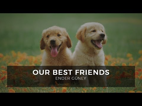Our Best Friends - Ender Güney (Official Audio)